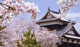 Festividad de los cerezos en flor