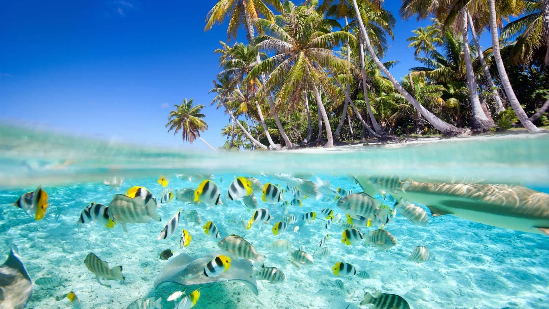 vemn a disfrutar de las mejores playas de Asia en tu viaje a Maldivas