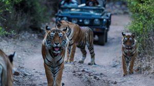 IN Taj Mahal y Tigres 10 días 4