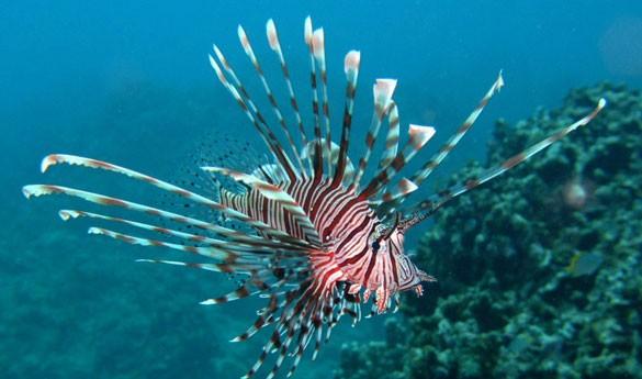 Bajo el Océano Índico