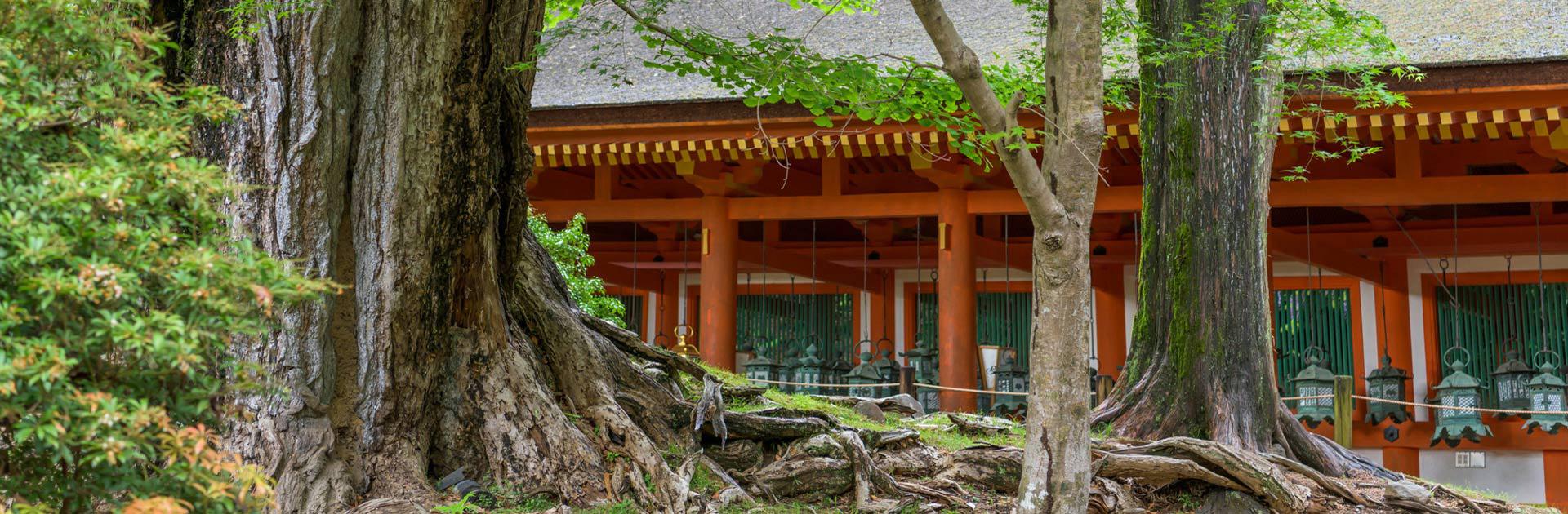 IDJP Japón Eterno y Bali 16 días 2
