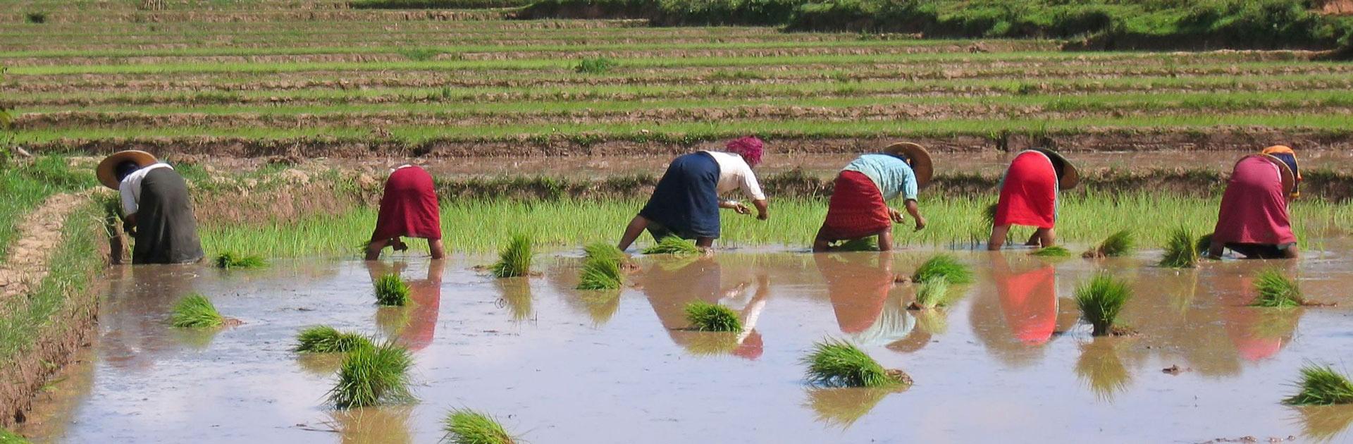 MM Trekking en Myanmar 14 días 2