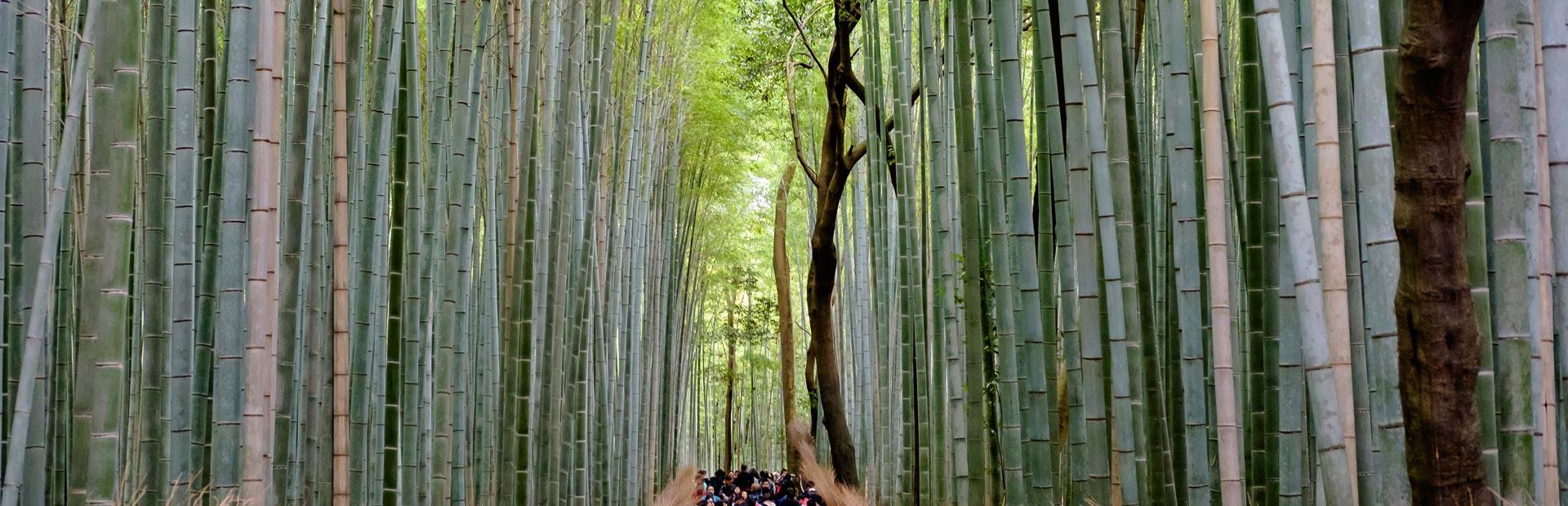 Konnichiwa Japón y Filipinas 14 dias 5