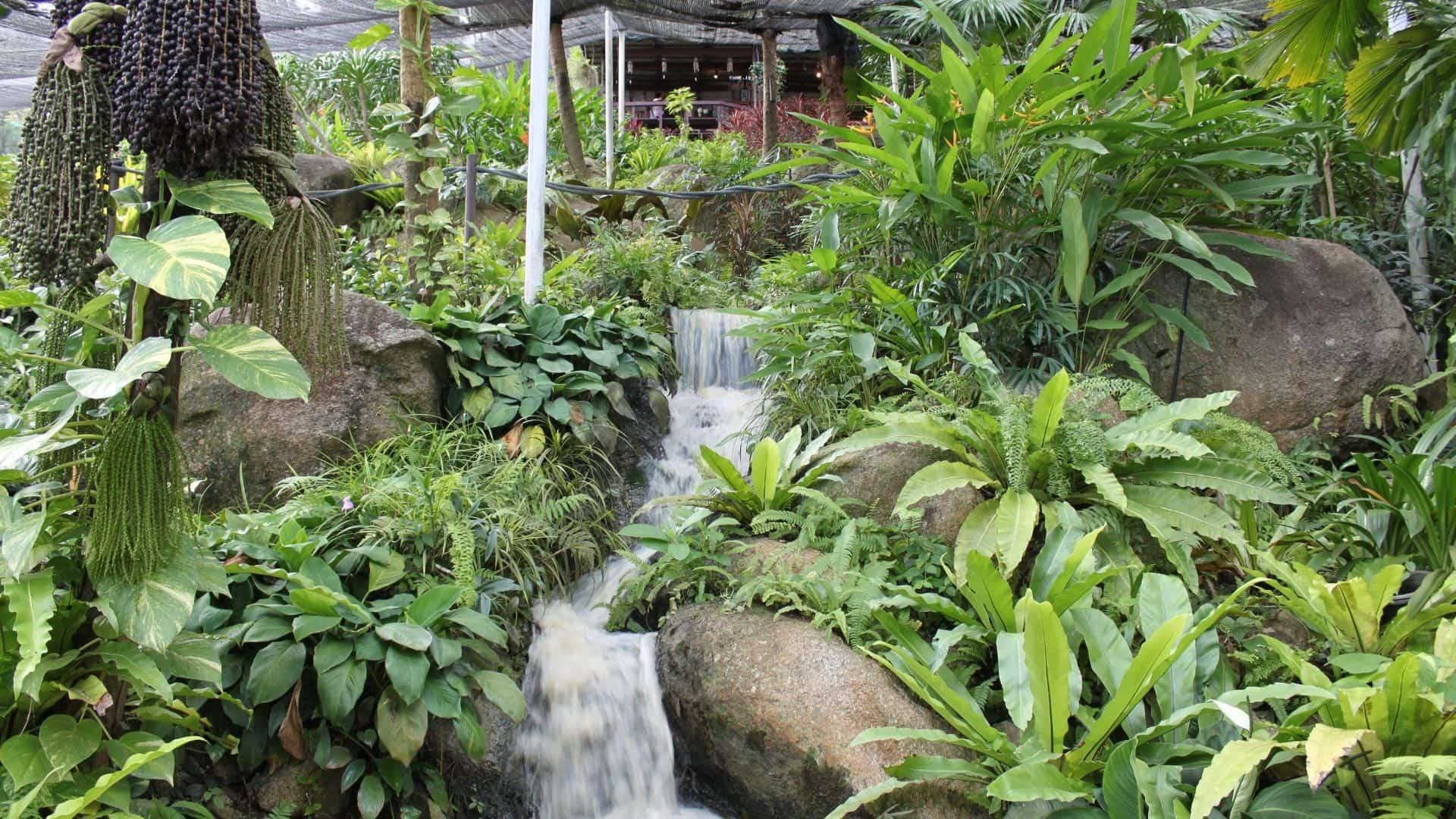 Jardín de las mariposas de samui