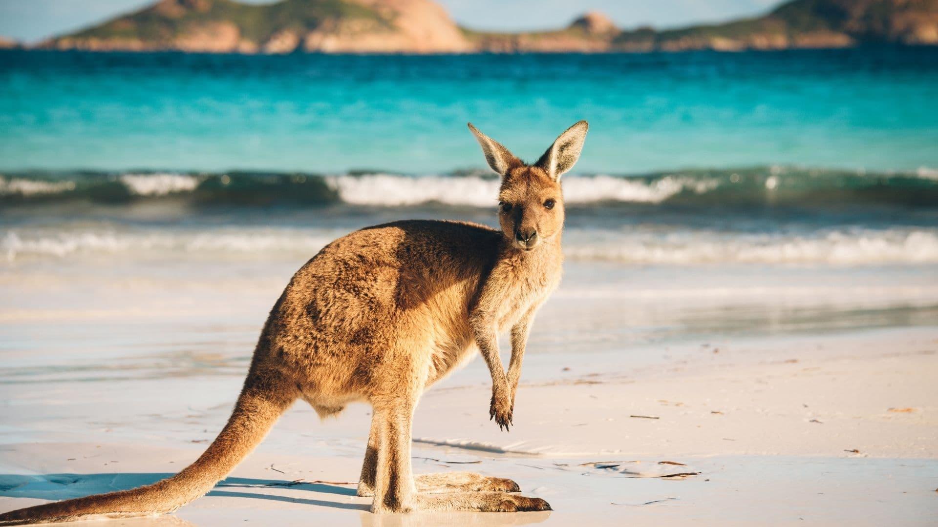 Entre las mejores playas de Asia no podemos olvidar las paradisiacas playas de Australia