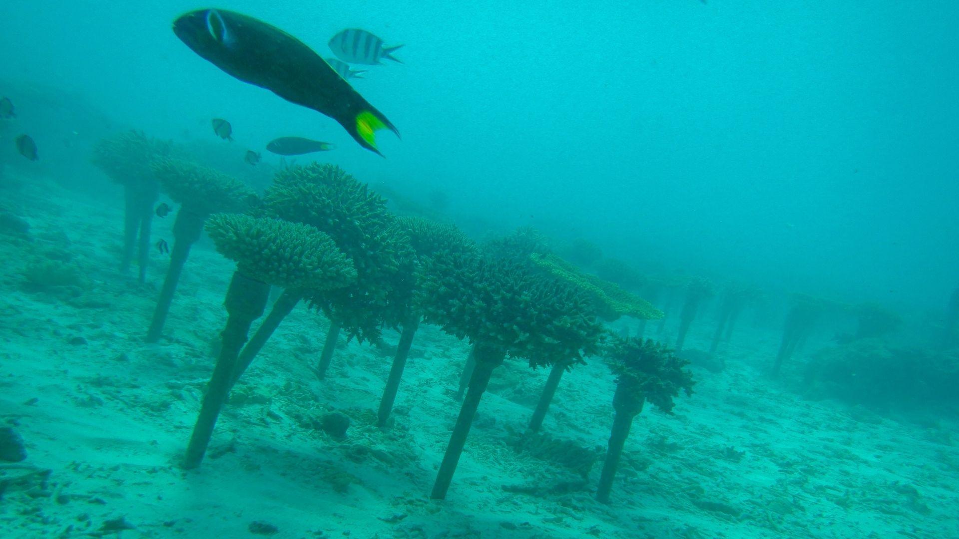 Okinawa es perfecto para practicar submarinismo