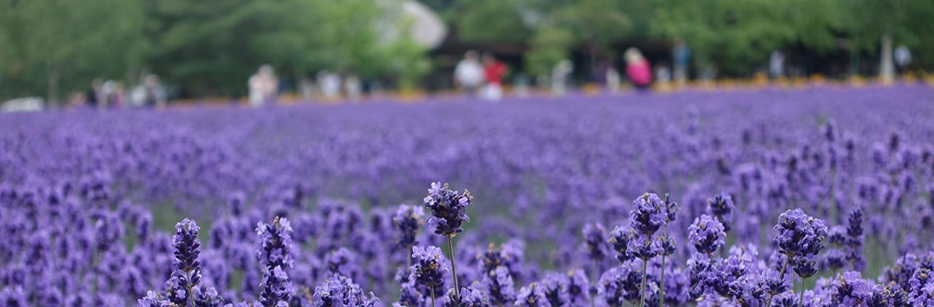 Japón por libre Hokkaido Naturaleza Salvaje 16 días 1