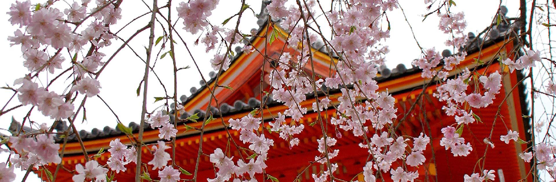 JP Semana Santa Japón 9 días 1