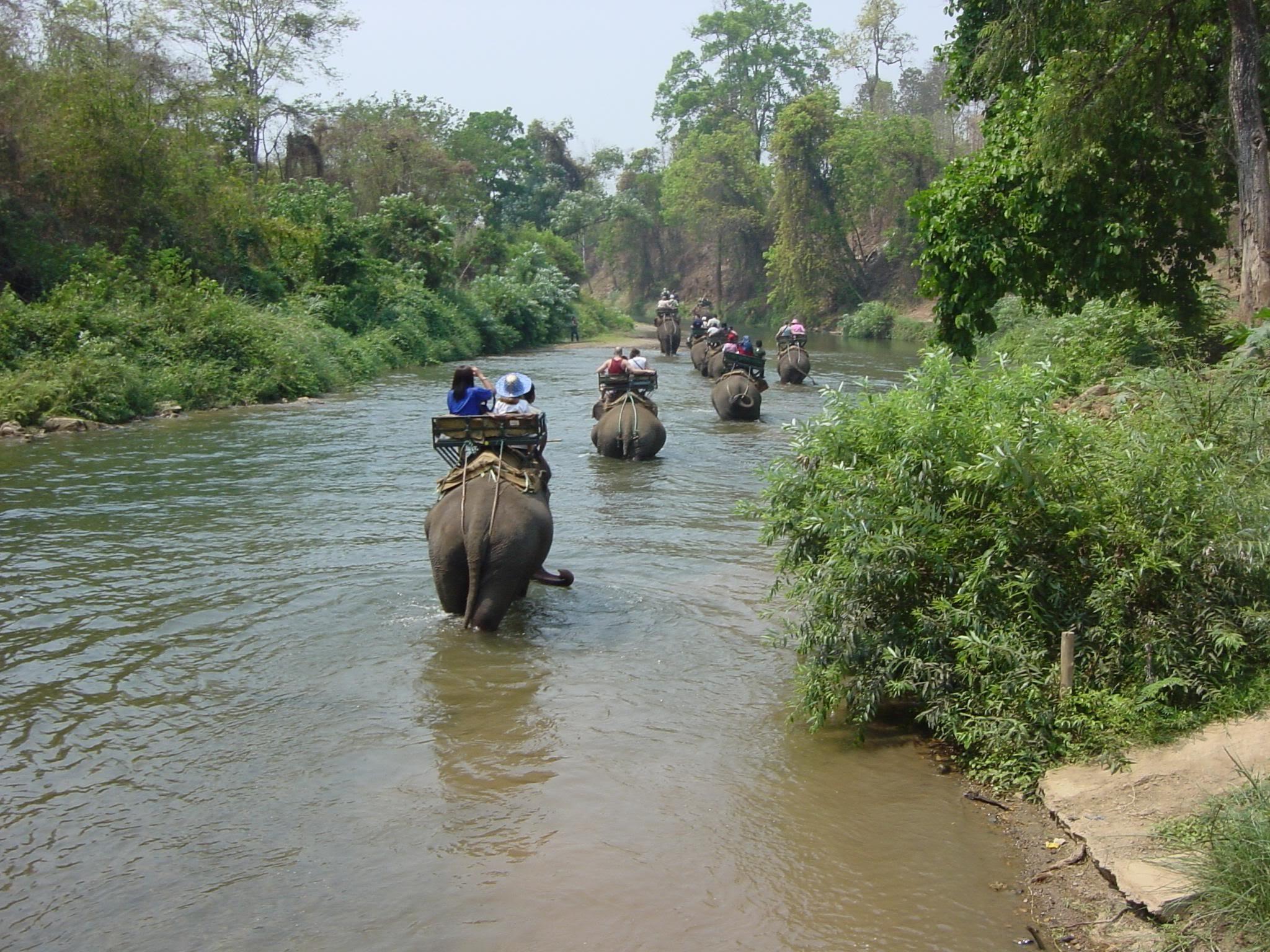 Los elefantes también bailan