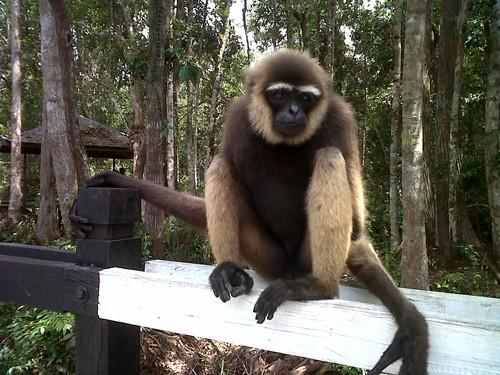 El Parque Nacional de Tanjung Puting en Indonesia