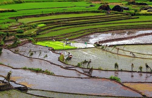 Los arrozales de los ifugao en Filipinas