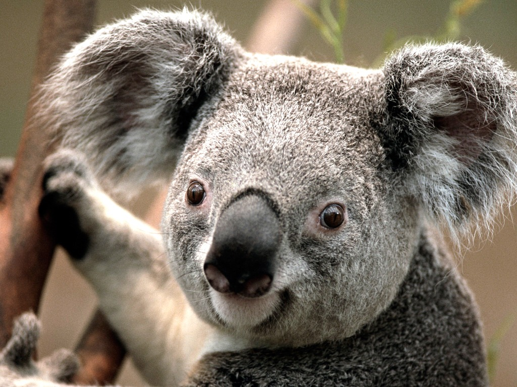Los animales que tienes que ver en un viaje a Australia