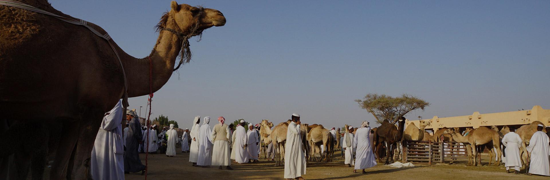 AEOM Viaje Entre Emiratos 8 días 4