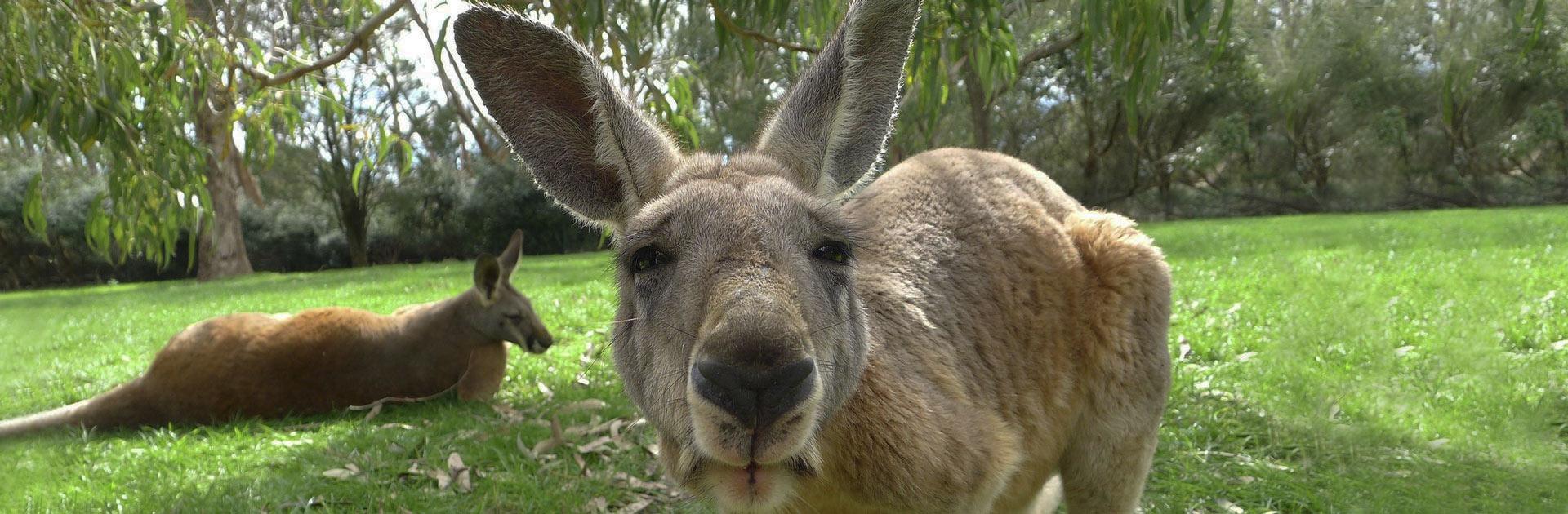 AU Australia Magnífica 12 días 1