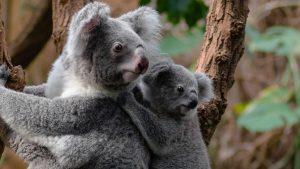 AU Ecos de Australia 15 días 1 1
