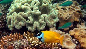 AUMV Australia y Maldivas 18 días 1