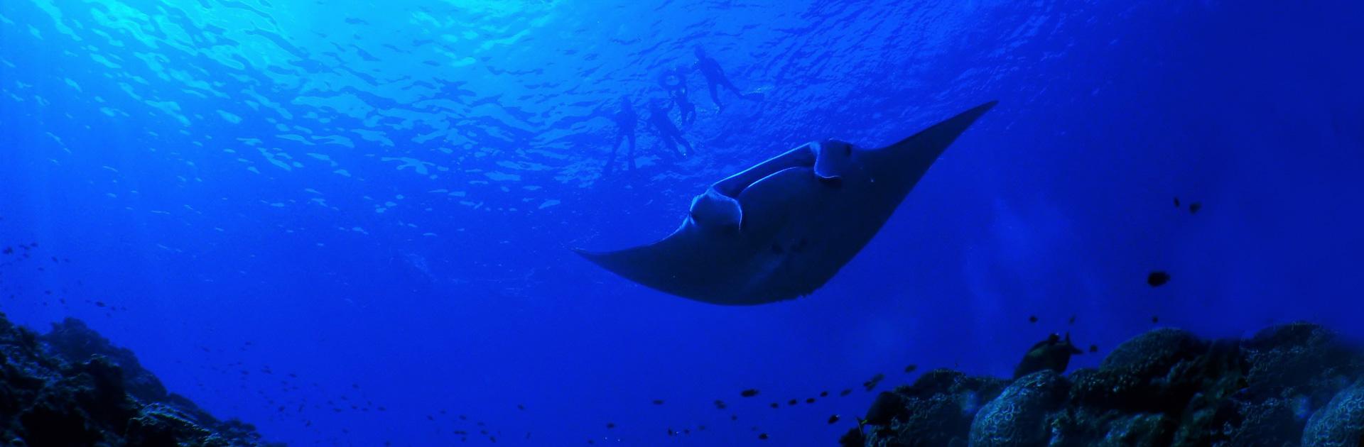 ID Bajo el Oceano Manta