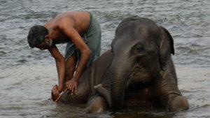 INLK Clásica India y Sri Lanka 13 días 1 1