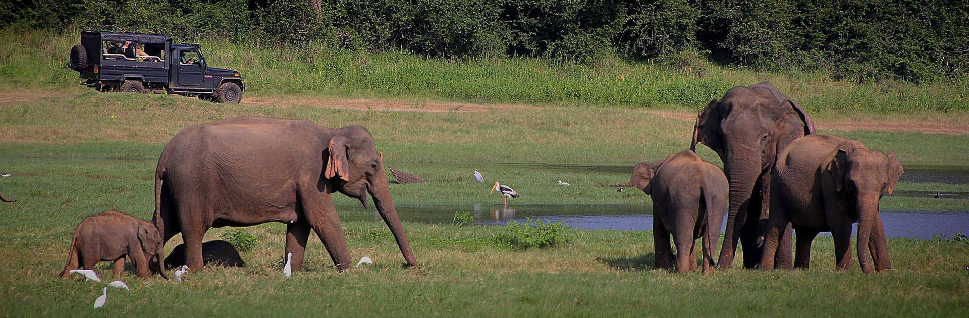 LK Explore Sri Lanka 9 días 2