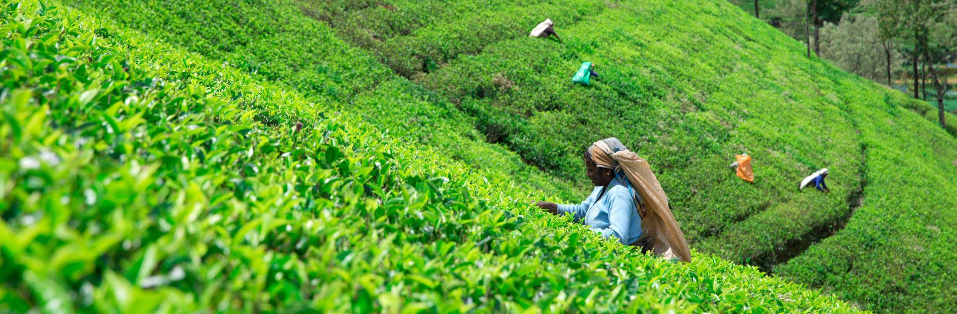 LK Explore Sri Lanka con playas Nordeste 12 días 2