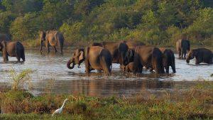 LK La Maravilla del Índico con Arugam Bay 12 días 1