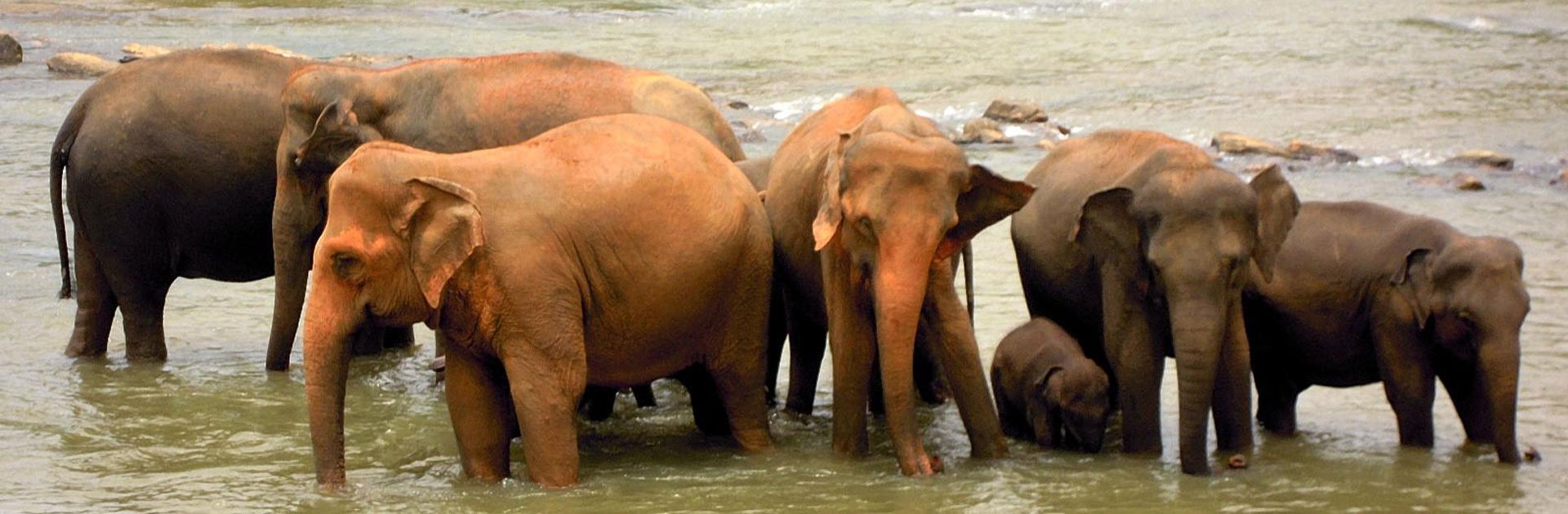 LK Sri Lanka Imprescindible con playas Passikudah o Tricomale10 días 2