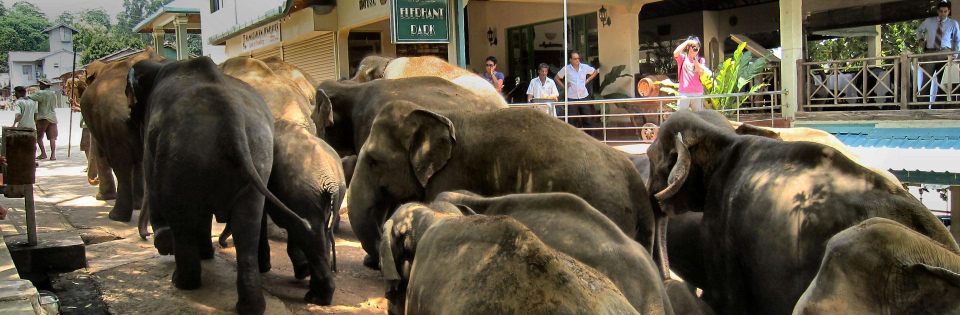 LK Top Sri Lanka y playas 9 días 3