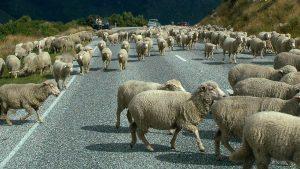NZ Nueva Zelanda Express 17 días 1
