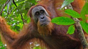 MY COrazón de Malasia y Borneo 5