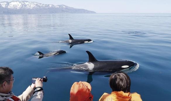Ver ballenas de Furano durante el verano
