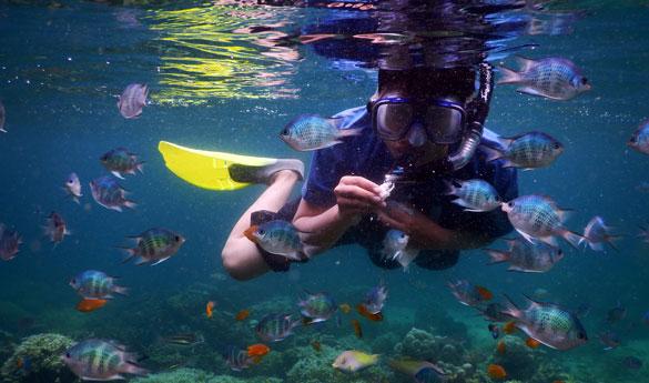 Practicar snorkeling en Bali
