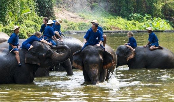 Chiang Mai Elefantes