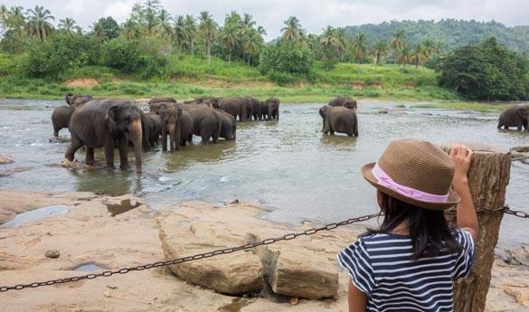 el orfanato de elefantes de Pinnawela