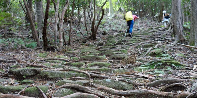 La ruta Iseji en Kumano Kodo