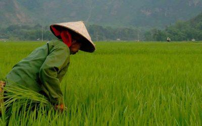 El Vietnam más tradicional: un país de aldeas y campos