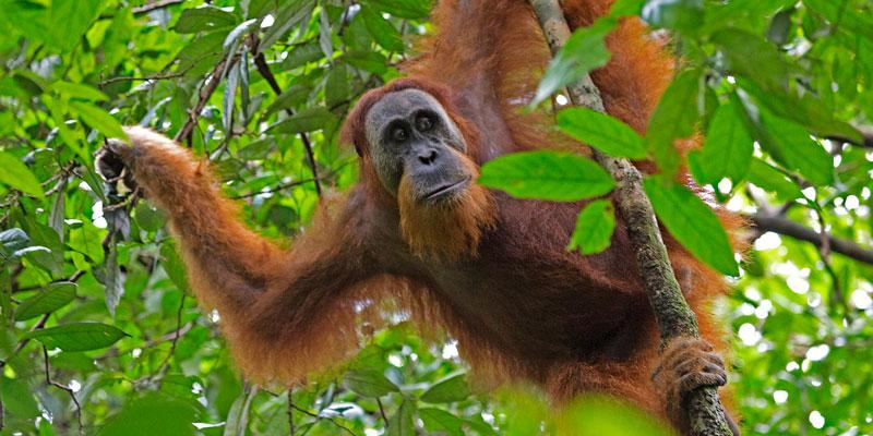 El norte de Sumatra